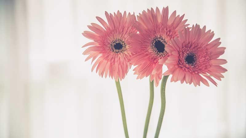 ピンと伸びた花